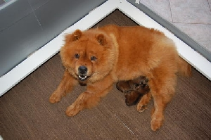 Mommy Ginger with her boys - 3 days old
