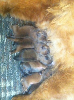 New Arrivals 3M+3F = litter on 12-22-12