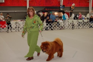 Cathi showing Riley in Parade of Title Holders St Louis 2013