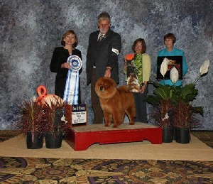 Pendleton Ginger - BOW the CCCI National Judge: G H Forsythe